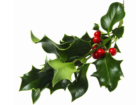 The jolliest of holly