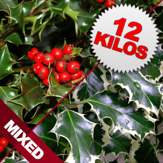 12 Kilos of Mixed Berried & Unberried Cut Holly