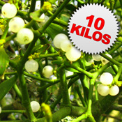 10 Kilos of Mistletoe