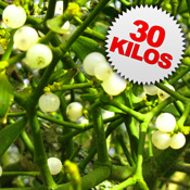 30 Kilos of Mistletoe