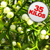 35 Kilos of Mistletoe