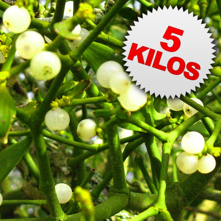 5 Kilos of Mistletoe