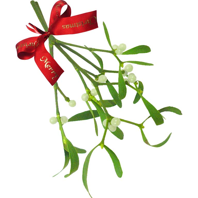 Few Sprigs of Fresh Berried Mistletoe