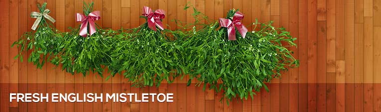 Fresh English Mistletoe
