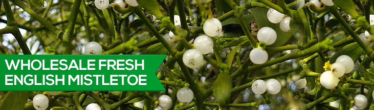 Wholesale Fresh English Mistletoe
